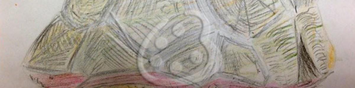 Kids' Art–Tortoise Drawing