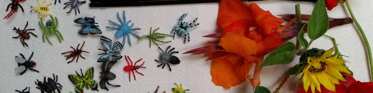 Bugs, Blooms, & Butterflies