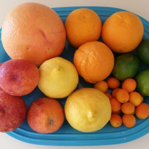 Citrus Fruits ~Frutas Cítricas
