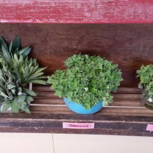Chino's Herbs