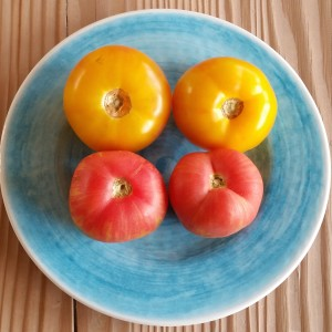 "Yellow and ""Peach"" Tomatoes"