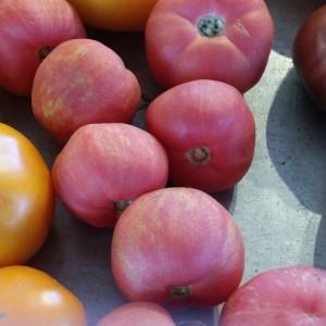 Chino Tomatoes