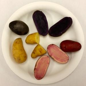 Purple, Pink & Fingerling Potatoes