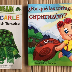 Turtle Books ~ Libros de tortugas