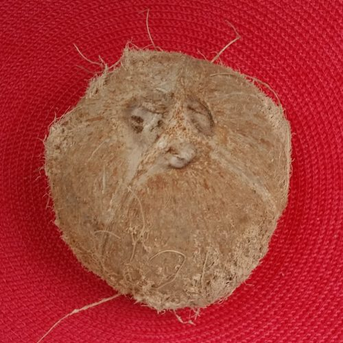 Coconut ~ Coco