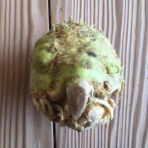 Celery Root ~ Raíz de apio