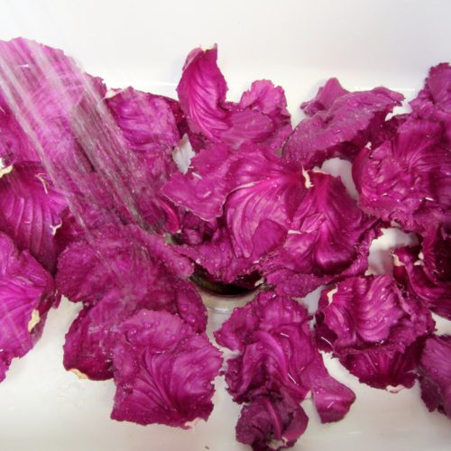 Red Cabbage ~ Col roja