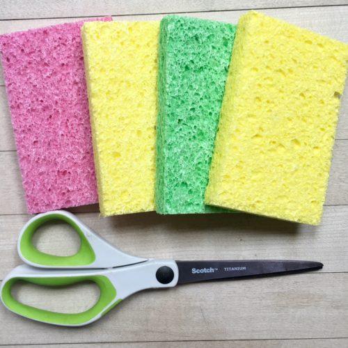 New Sponges Nuevas esponjas