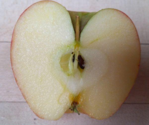 A Cut Apple  Corte de manzana